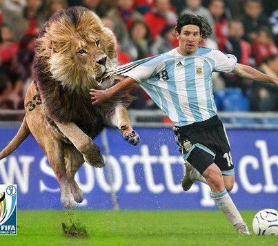 game-lion